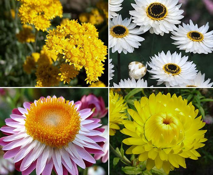 Вьющиеся цветы для сада многолетние Фото и названия